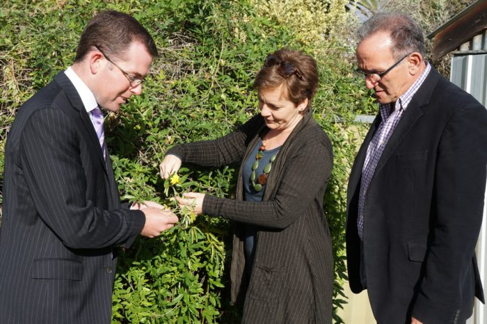 $66,000 FOR INVERELL SHIRE'S FIGHT AGAINST CATS CLAW WEED