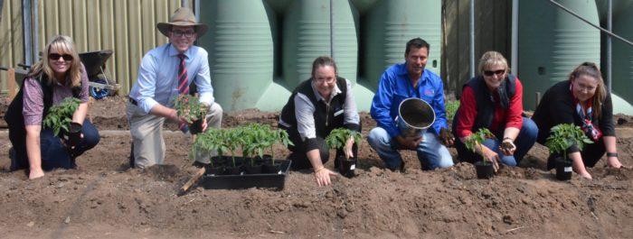 SPRING TOMATO PLANTING KICKS OFF GLEN INDUSTRIES' COMMUNITY GARDEN