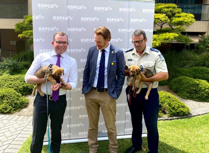 STATEWIDE CRACKDOWN ANNOUNCED ON ILLEGAL PUPPY FACTORIES