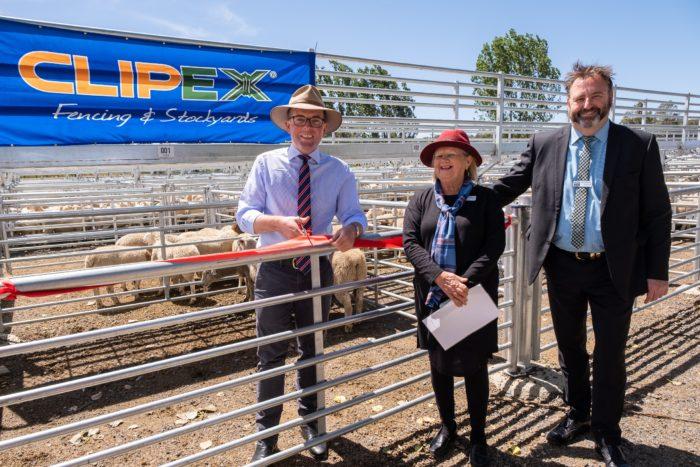 $1.3 MILLION SHEEP SALEYARDS 'RUSTLES UP' NEW ERA FOR GLEN INNES