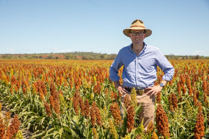 HELP AVAILABLE TO NORTHERN NSW FARMERS PLAGUED BY LOCUSTS