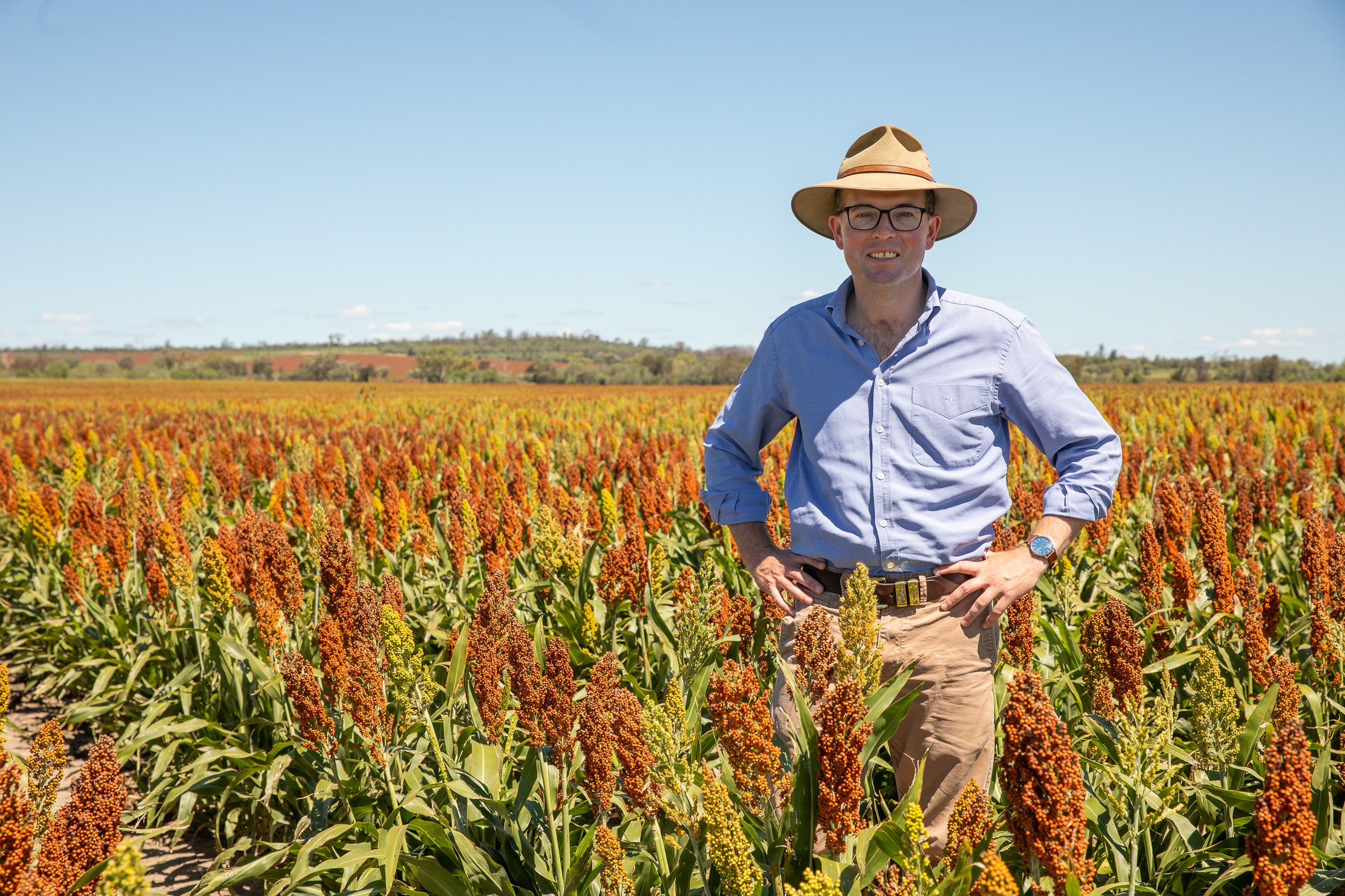 HELP AVAILABLE TO NORTHERN NSW FARMERS PLAGUED BY LOCUSTS ...